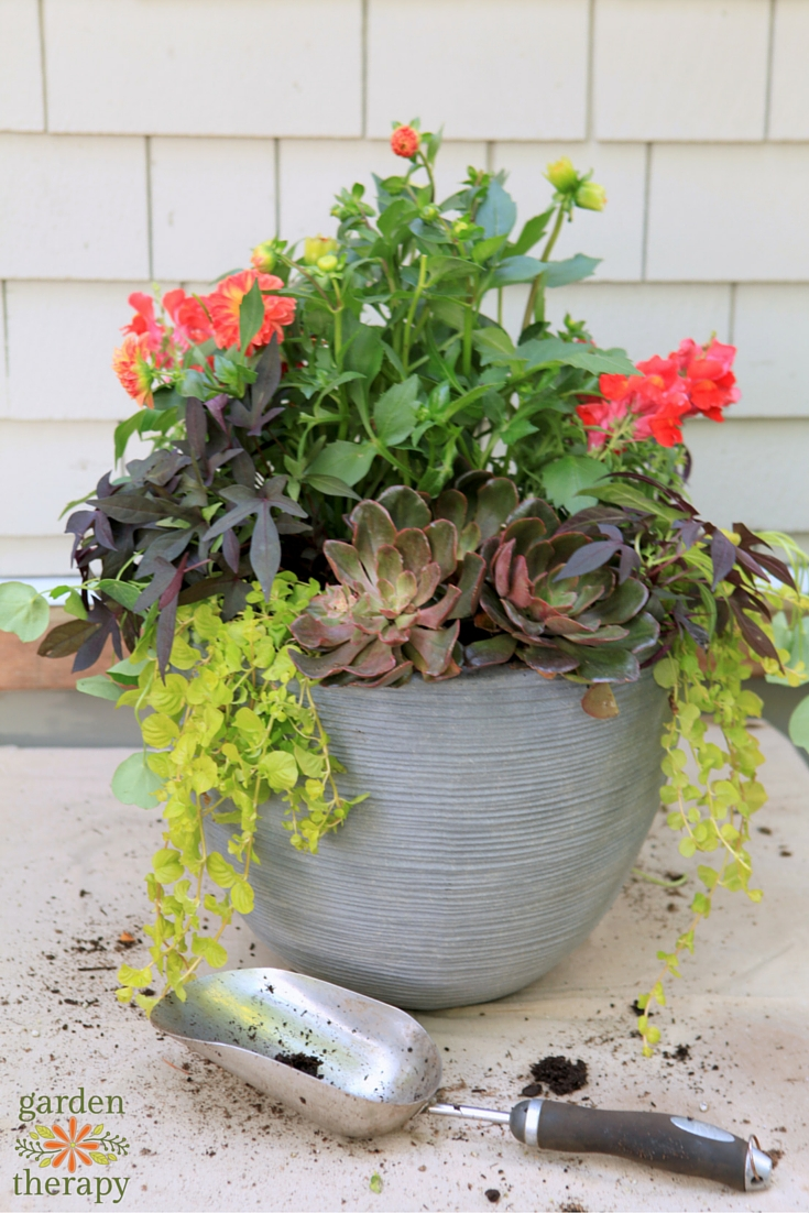 How to Make a Stunning Container in Just 3 Steps