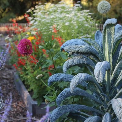 Design a Rainbow Vegetable Garden with a Cornucopia of Colourful Plants
