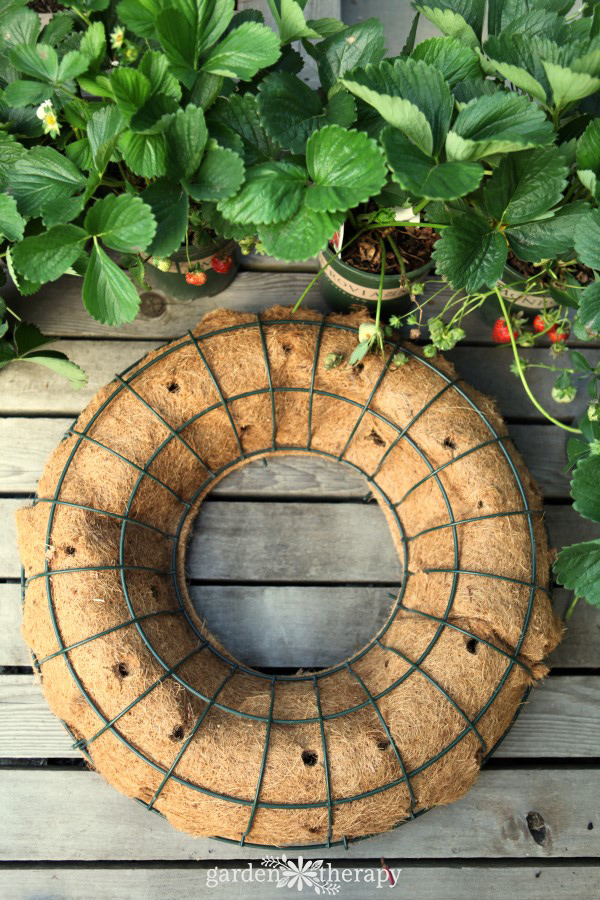 Making a DIY Living Edible Wreath
