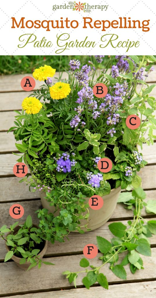 Plant a Mosquito-Repelling Container Garden to Protect Entertaining Spaces