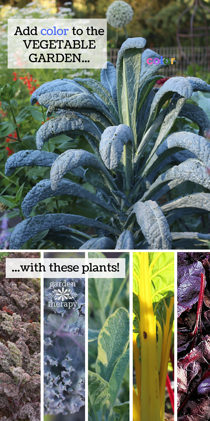 Plant a Rainbow of color in your vegetable garden with these top plants for designing with edible foliage