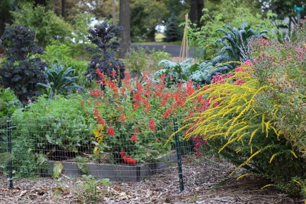 View of garden with Redbor & Lacinato Kale in a colorful vegetable garden design plan