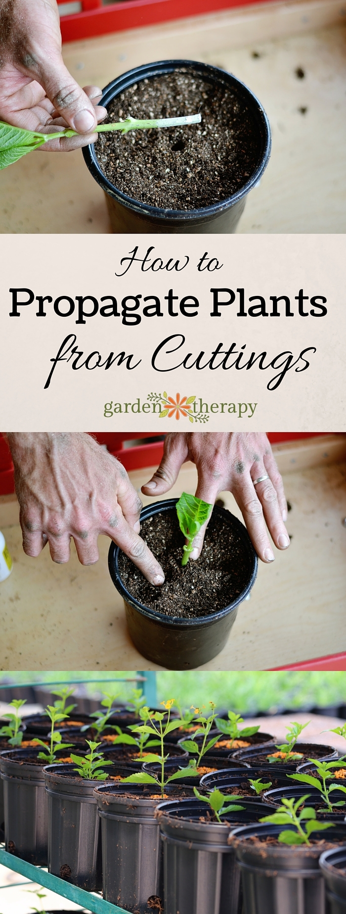 How to Propagate Plants from Cuttings