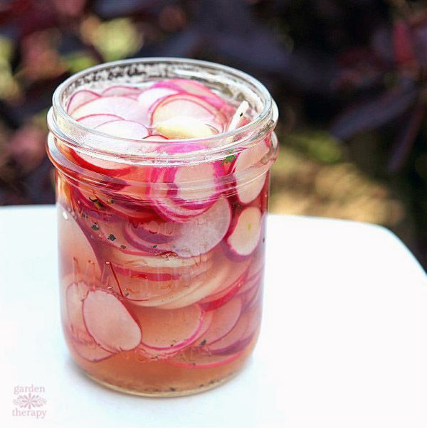 Brine over fresh radishes to make quick pickled radish recipe in a Mason Jar
