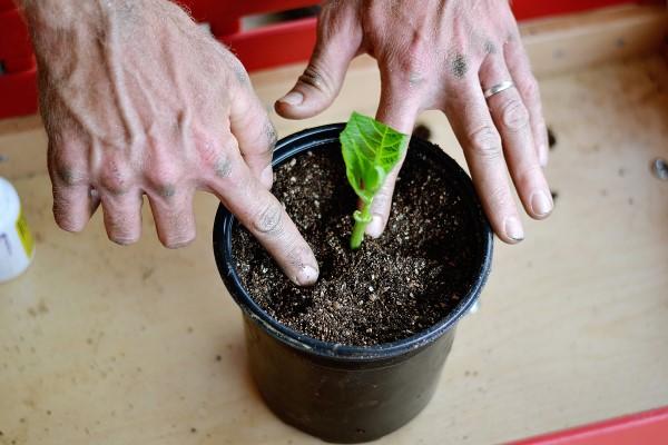 propagating a new plant