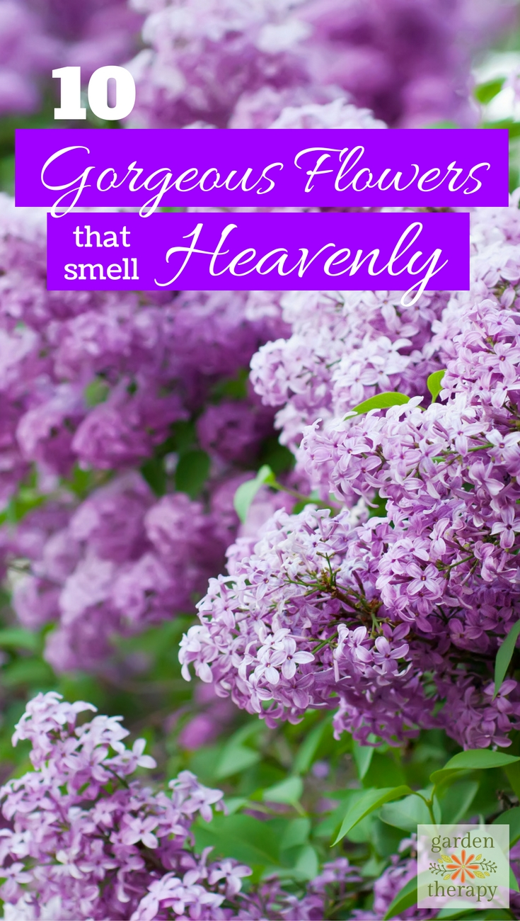 10 gorgeous fragrant flowers for your garden that smell heavenly