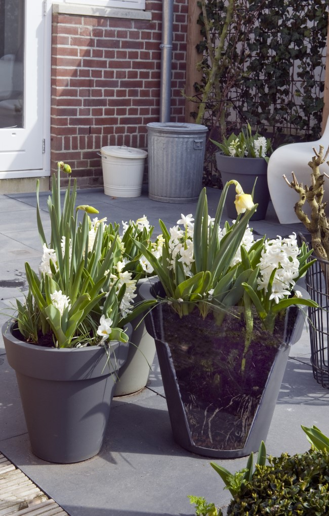 A Variety of Bulbs Growing in a Layered Pot Garden