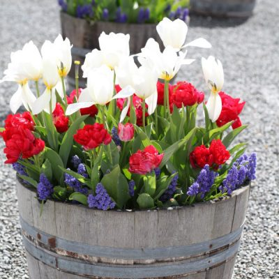 Preparing Fall Bulb Planters for Spring