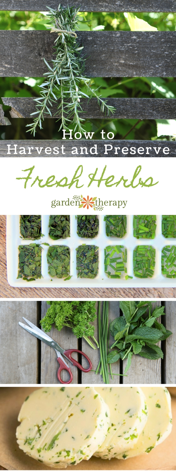 How to Harvest and Preserve Fresh Herbs