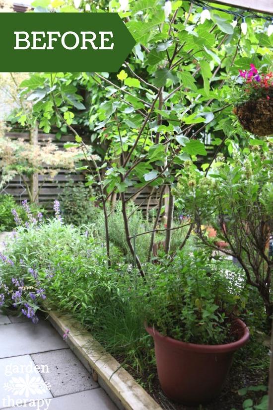 Overgrown herb garden BEFORE renovation