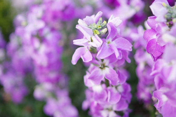 Garden Bush: Grow These 10 Fragrant Flowers For A Heavenly Smelling