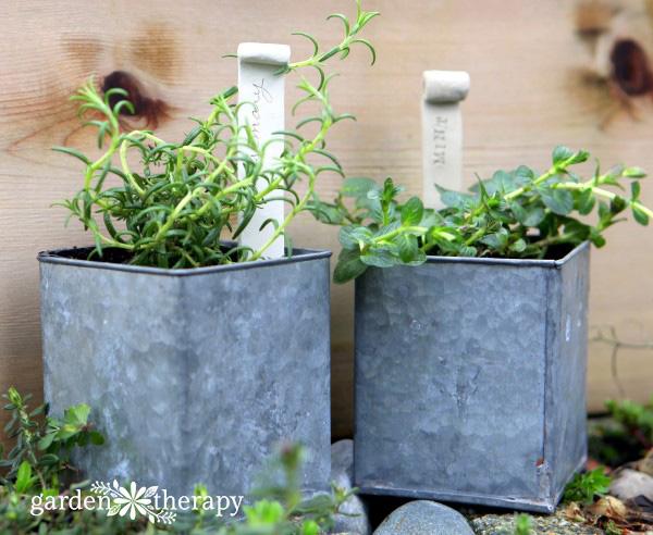 Overwinter herbs indoors