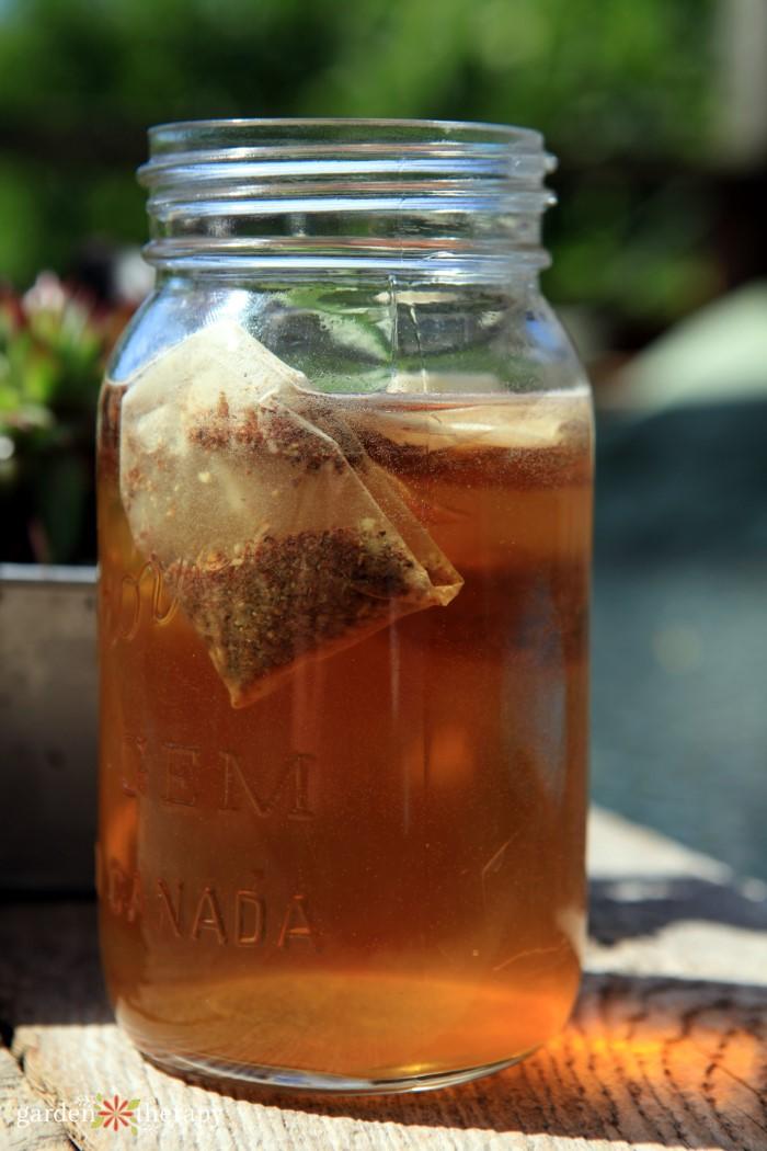 sun tea in a mason jar