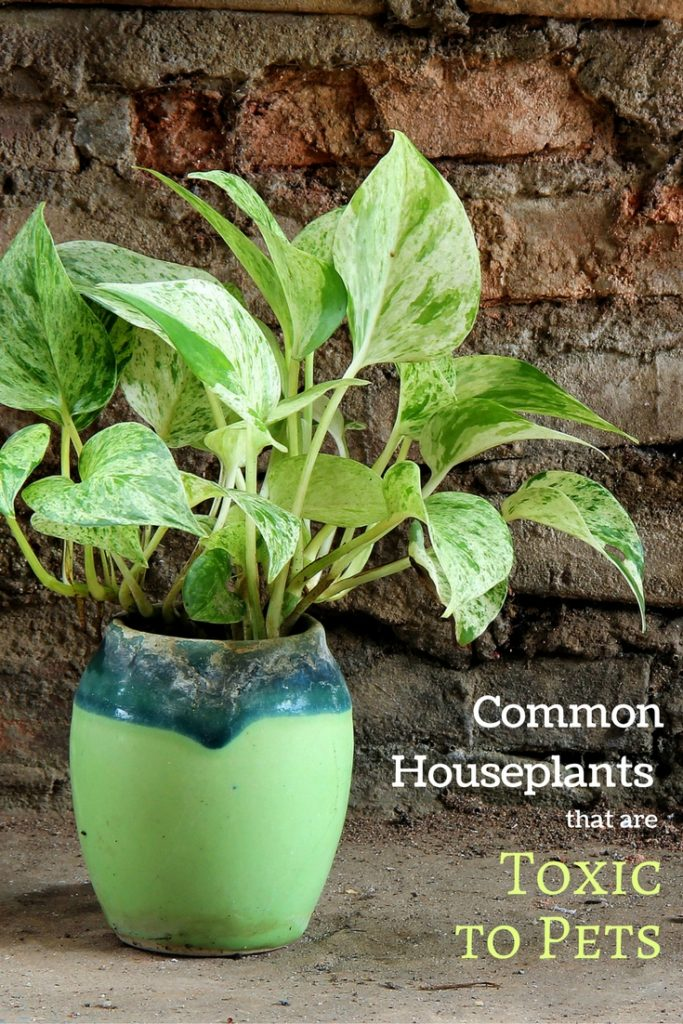 common houseplants that are poisonous to pets
