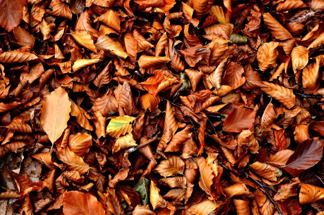 fallen-leaves-for-compost-recipe