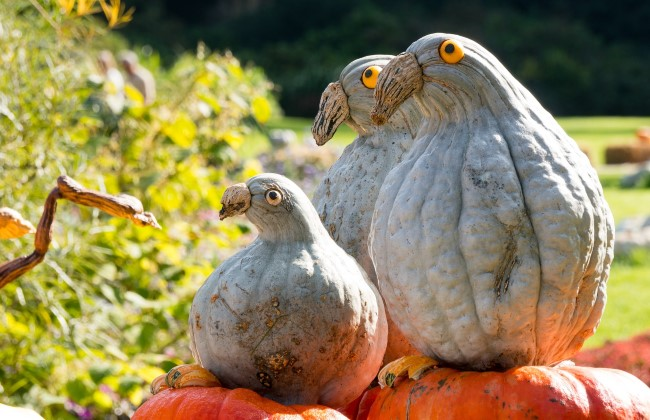 gourd-birds-quirky-fall-decorating-with-pumpkins