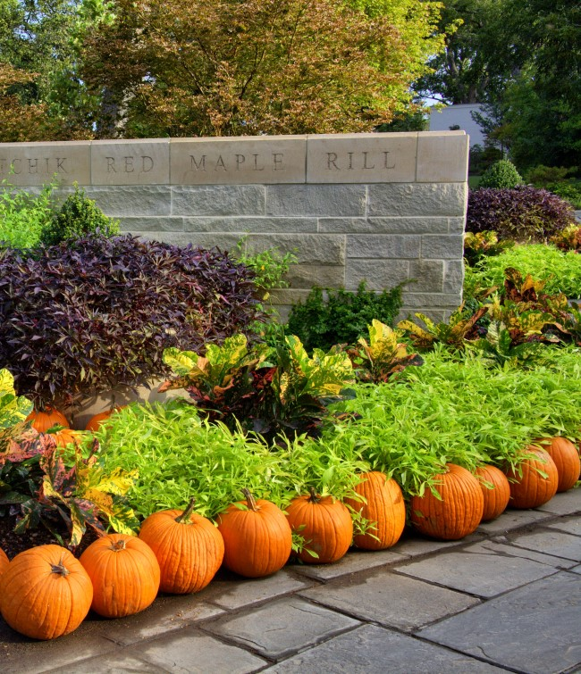 line-the-garden-with-pumpkins