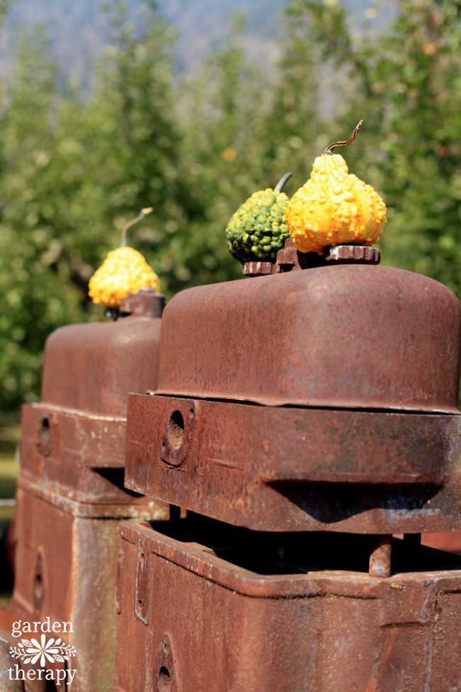 quirky-fall-decorating-with-pumpkins-and-squash
