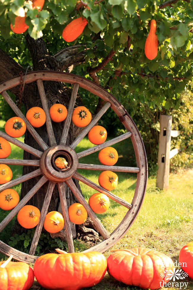 Wagon wheel with pumpkins