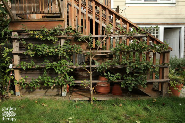 espalier-after