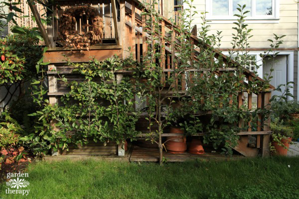 espalier-before