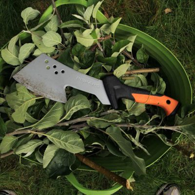 How to Remove Suckers from Trees (and Why They are There in the First Place)