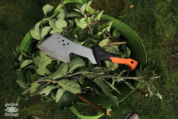 how-to-remove-suckers-from-a-tree