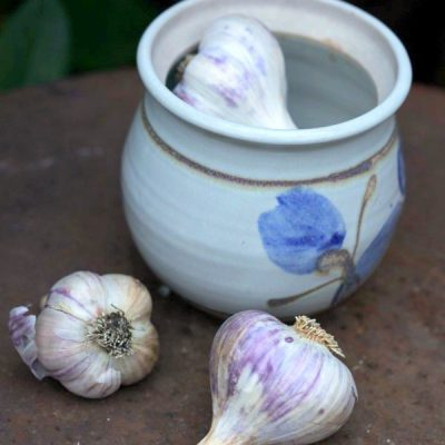 Protect Your Garden from Vampires: How to Grow Garlic