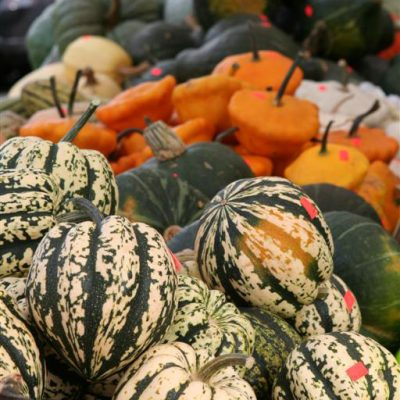 What the Heck is That?! Your Guide to Delicious Winter Squash