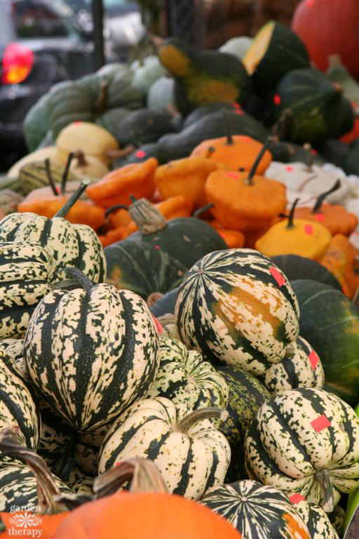 Discover the many varieties of winter squash available and learn the best way to cook them in this guide to demystifying winter squash.