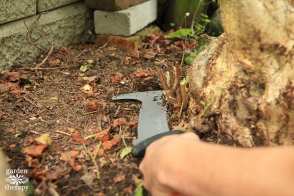 sawing-the-suckers-with-the-billhook-saw