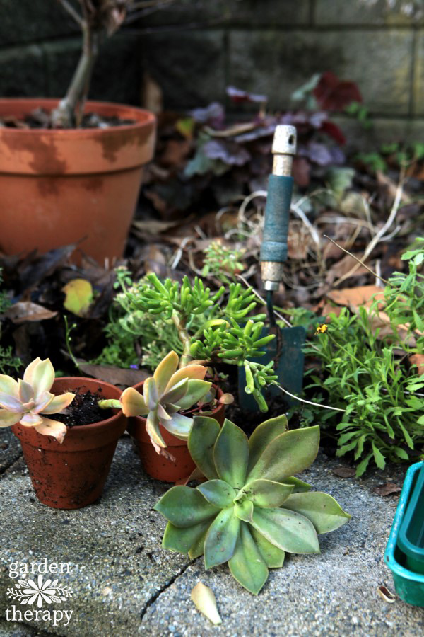 Guide to overwintering succulents