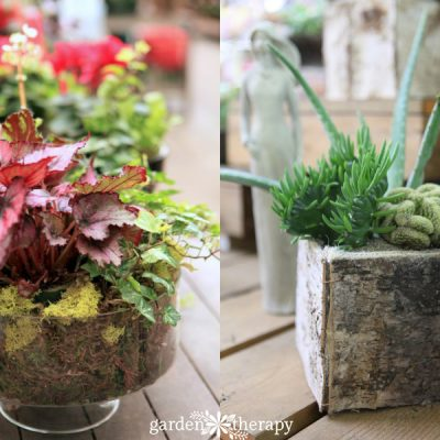 Playing with Houseplants for Indoor Garden Therapy
