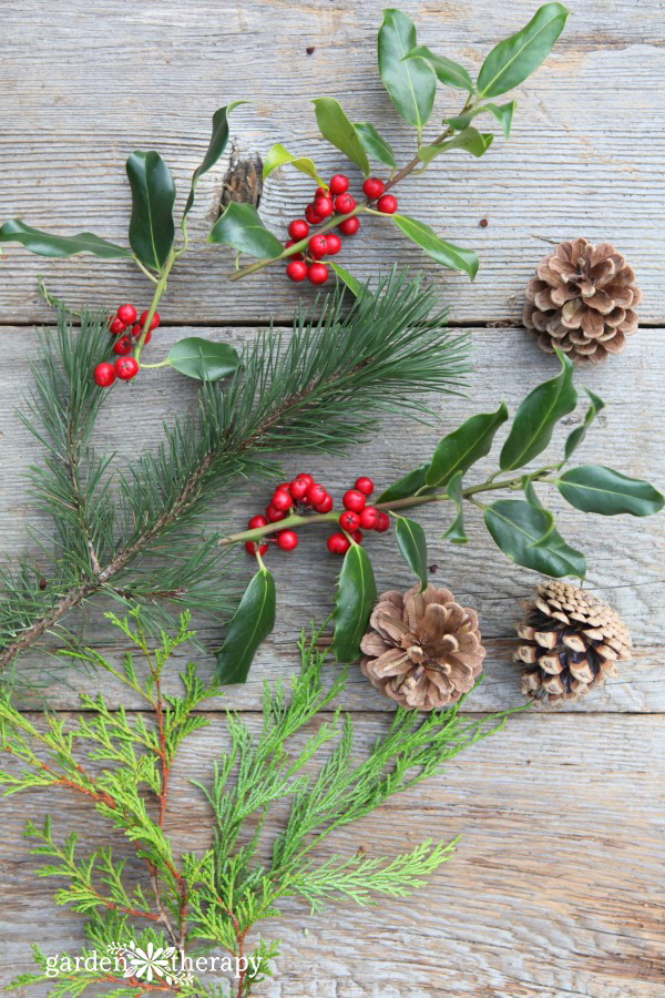 Holiday greenery is not limited just to evergreens, and it's not always green! Some of the most beautiful holiday arrangements include both needle and broad-leaf evergreen foliage, as well as perennial flower and seed heads, herbs, and branches.