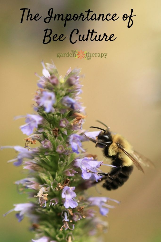 The Importance of Bee Culture