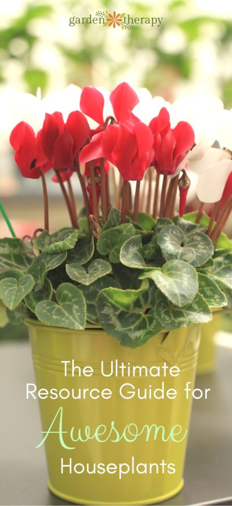 the ultimate resource guide for awesome houseplants