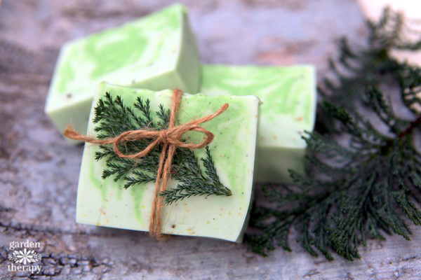 This winter forest soap recipe is scented with essential oils from forest trees making it both fresh and woodsy. Quite refreshing for your morning shower!