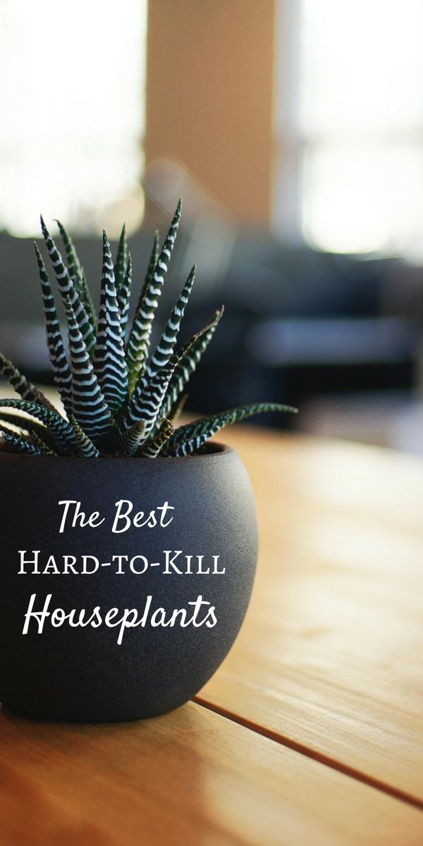 A great list of hard-to-kill houseplants