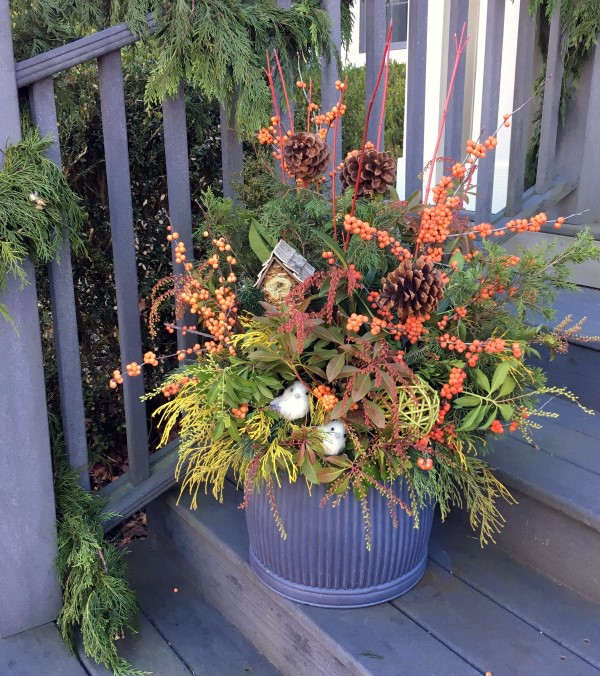 design a container garden that provides food for backyard birds