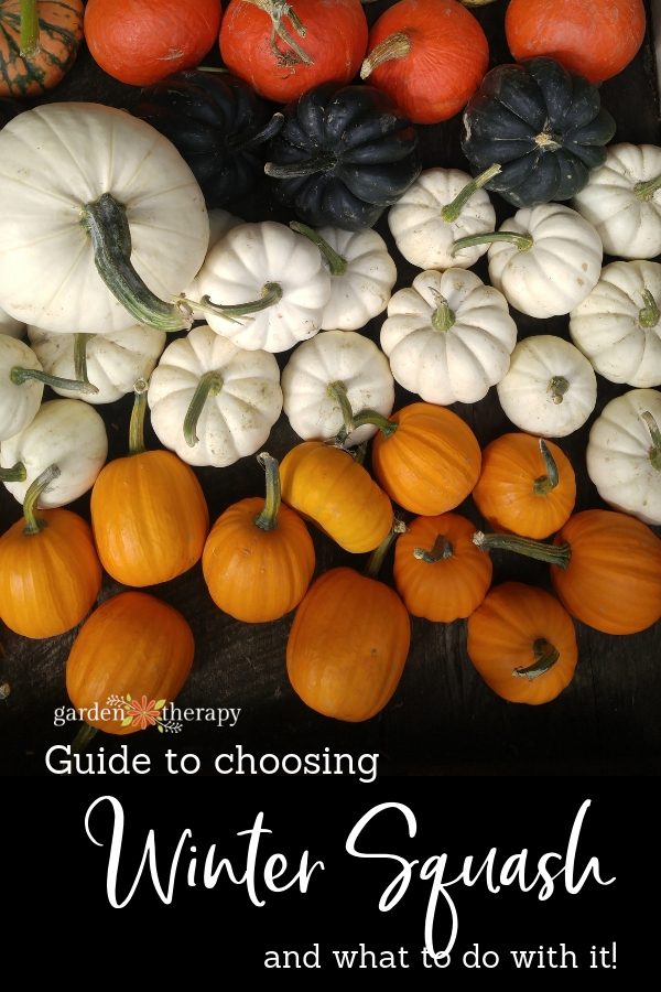 Guide to Choosing Winter Squash