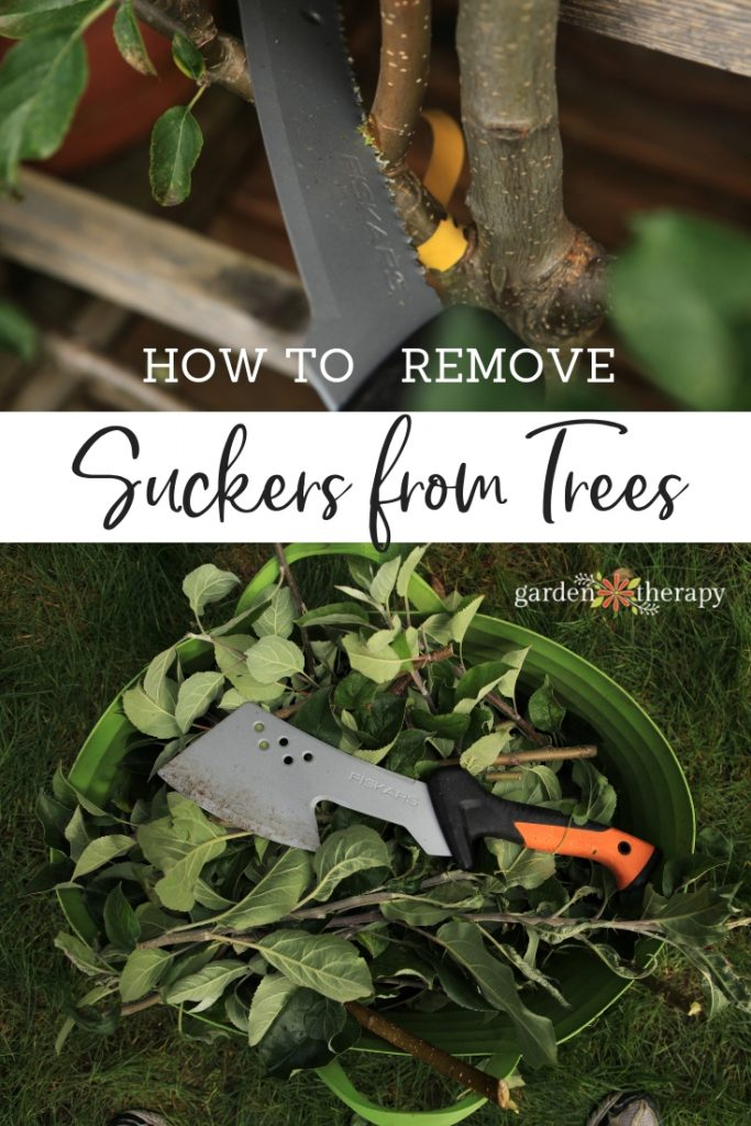 How to Remove Suckers from Trees