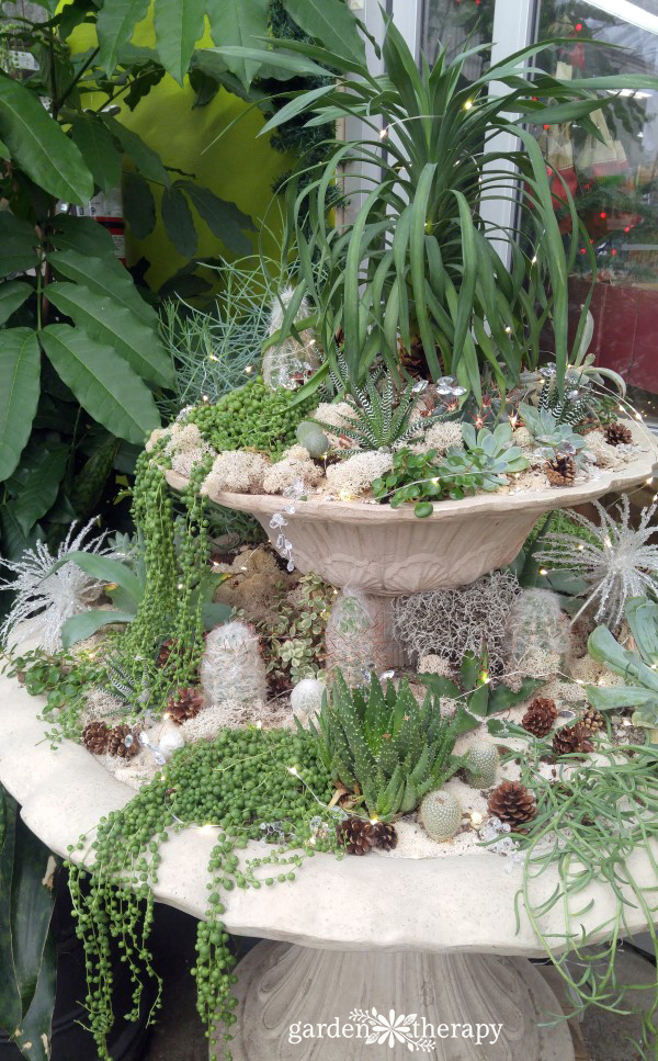 Learn how to do some basic winter fountain care tasks, then use the garden to decorate it up with greenery from the garden, lights, and ornaments.