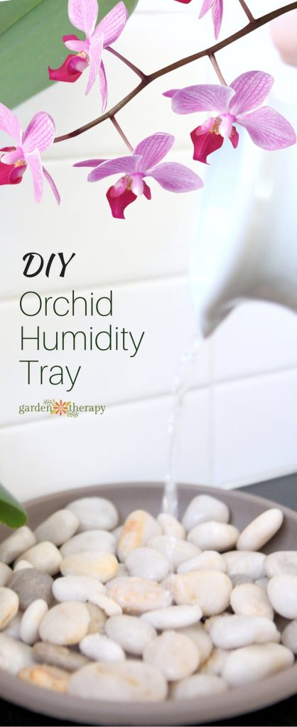 How to Make an Orchid Humidity Tray