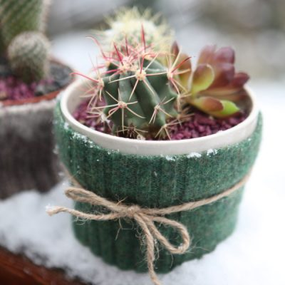 Keep Your Plants Toasty in these Felted Cactus Sweaters