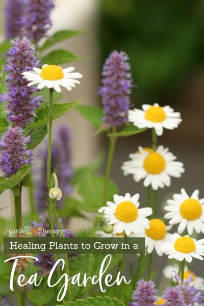 "Chamomile flowers with copy ""Healing Tea Garden Plants"""