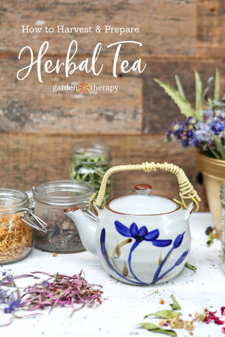 "Tea pot and jars of herbs with copy ""How to Harvest and Prepare Herbal Tea"""