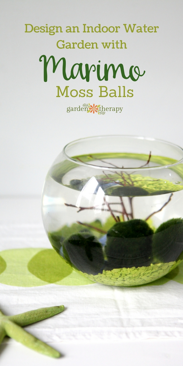 Designing a Water Garden with Marimo Moss Balls