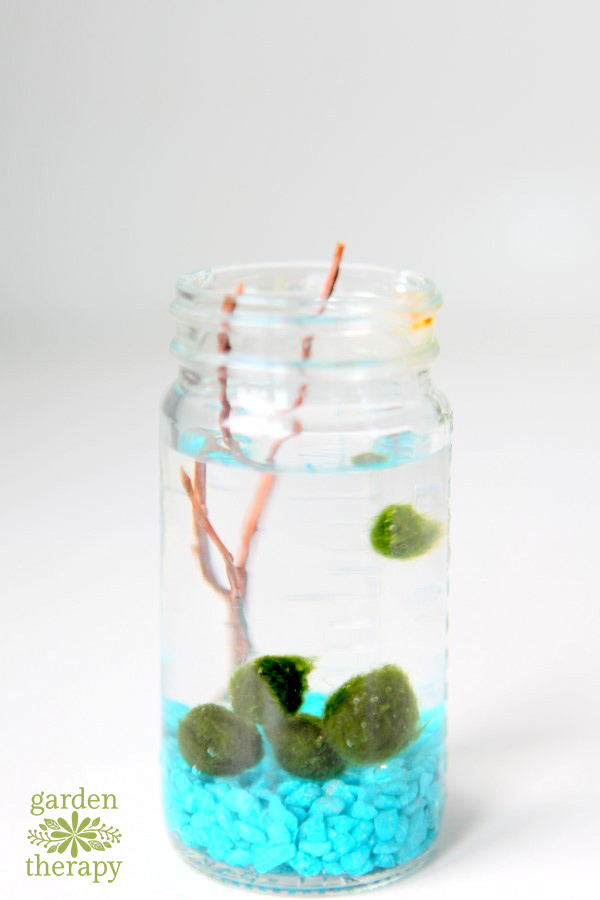 How to Grow and Care for Marimo Moss Balls