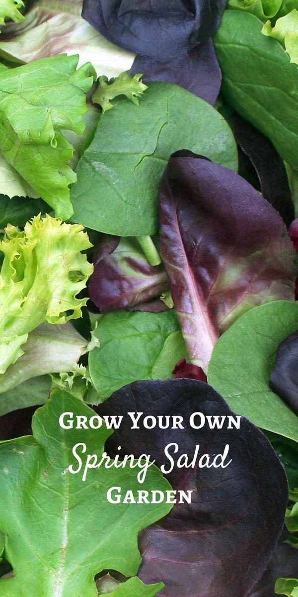 Grow your own spring salad garden