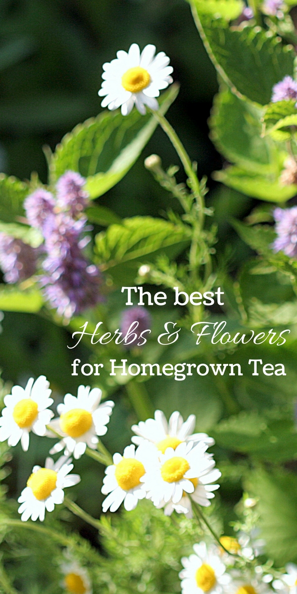 The Best Herbs and Flowers to Grow for Homegrown Tea